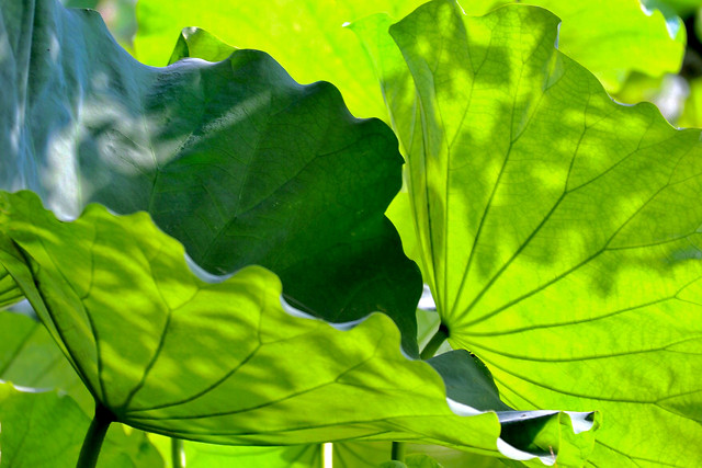 leaf-flora-nature-growth-environment picture material