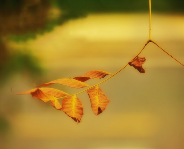 fall-leaf-tree-blur-still-life 图片素材
