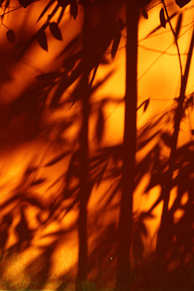 sunset-abstract-blur-flame-light 图片素材