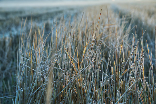 nature-grass-no-person-dawn-landscape picture material