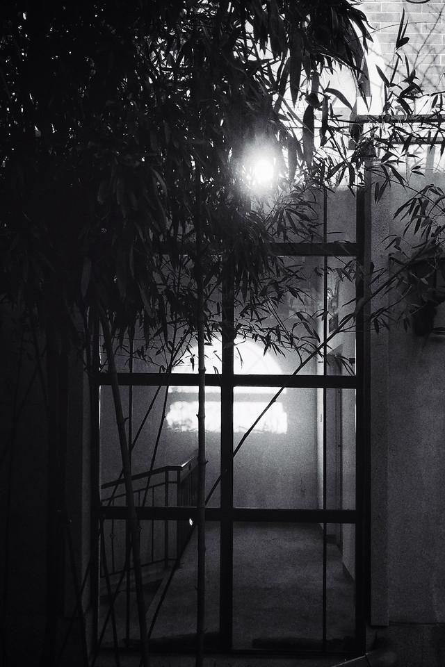 no-person-window-black-silhouette-tree picture material