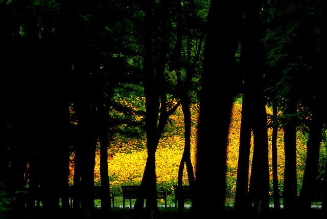 dawn-tree-landscape-light-sun picture material