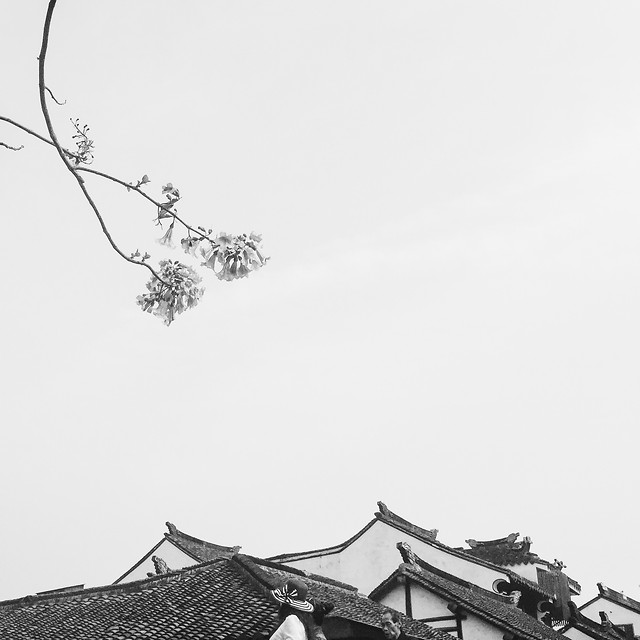 roof-tree-sky-monochrome-black-white picture material