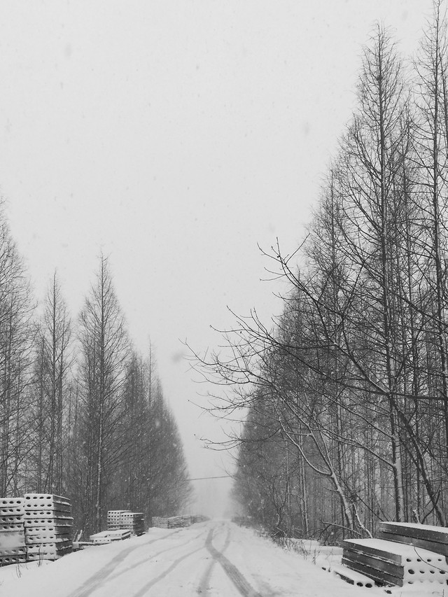 winter-snow-fog-tree-cold picture material