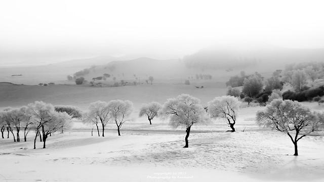 snow-winter-fog-white-cold 图片素材