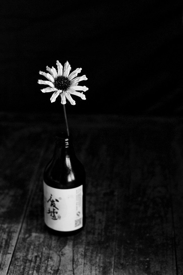 no-person-black-and-white-nature-monochrome-photography-flower picture material