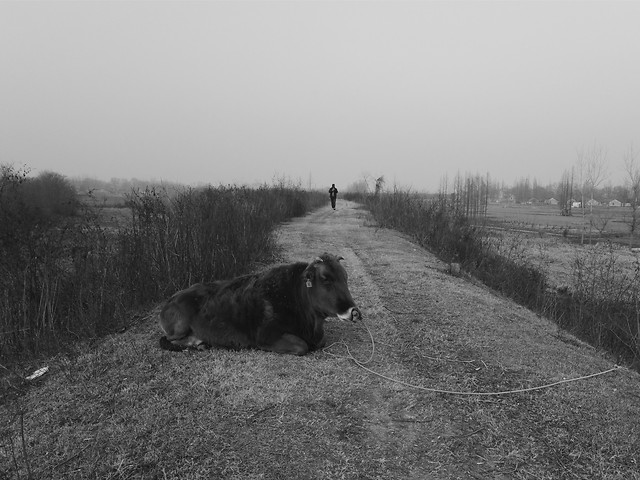 no-person-mammal-black-winter-landscape picture material
