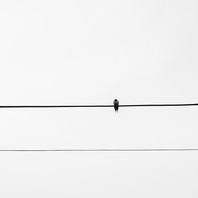 bird-wire-sky-black-light picture material