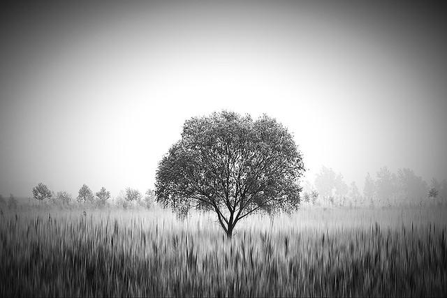 landscape-dawn-no-person-fog-sunset picture material