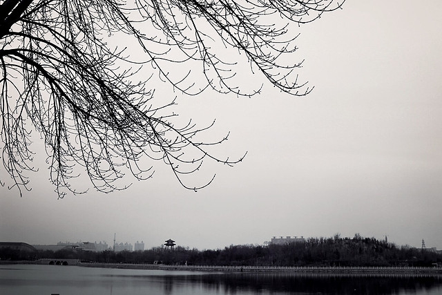 tree-landscape-lake-nature-river picture material