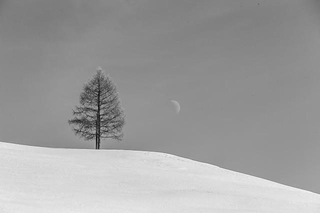snow-winter-cold-fog-no-person 图片素材