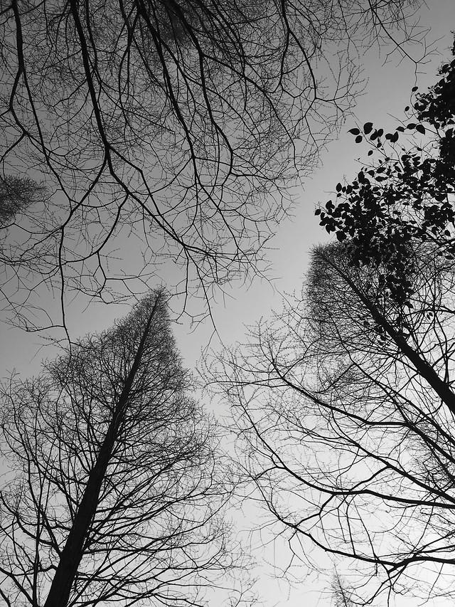 winter-tree-wood-fog-branch 图片素材