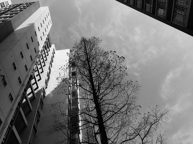 monochrome-sky-no-person-street-black-white picture material