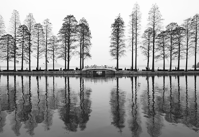 reflection-no-person-water-tree-nature 图片素材