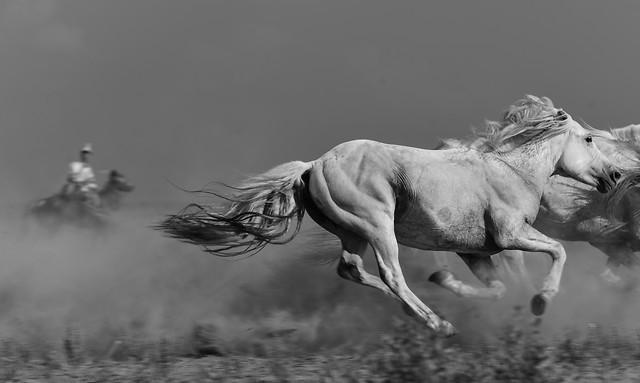 cavalry-monochrome-mammal-horse-one 图片素材