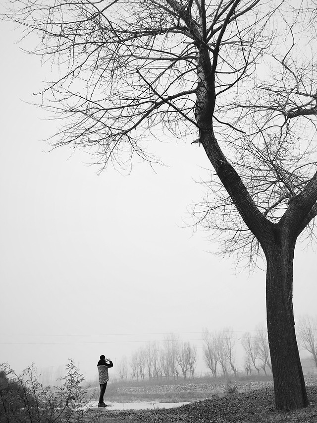 winter-tree-fog-snow-monochrome picture material