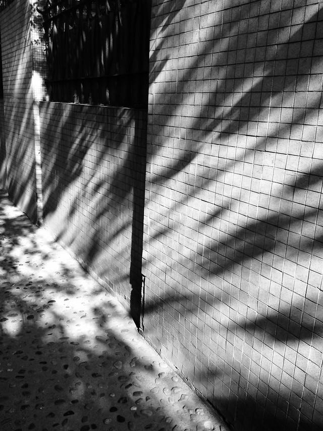 monochrome-rain-black-white-nature-no-person picture material