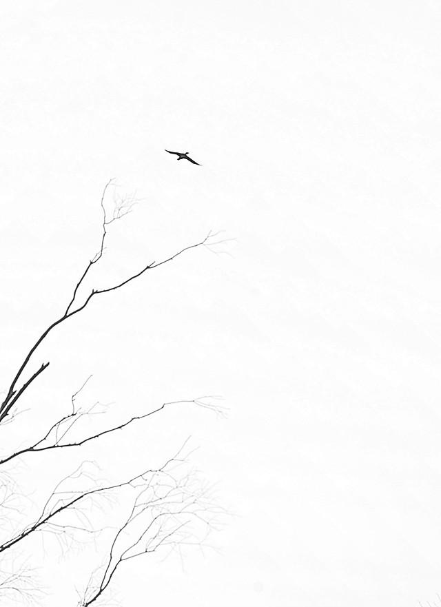 bird-silhouette-monochrome-sky-nature picture material