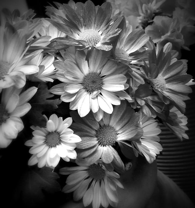 flower-nature-floral-flora-color 图片素材