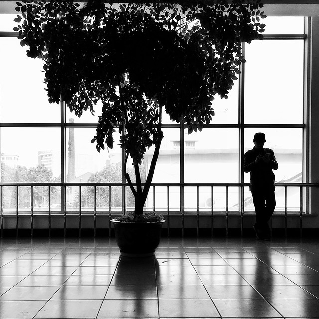 silhouette-tree-backlit-people-shadow picture material