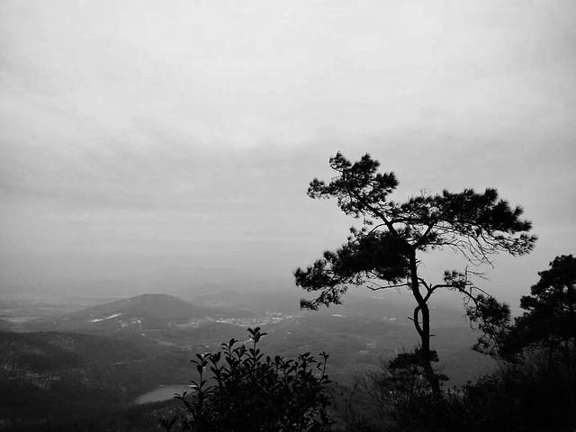 fog-tree-no-person-monochrome-landscape picture material