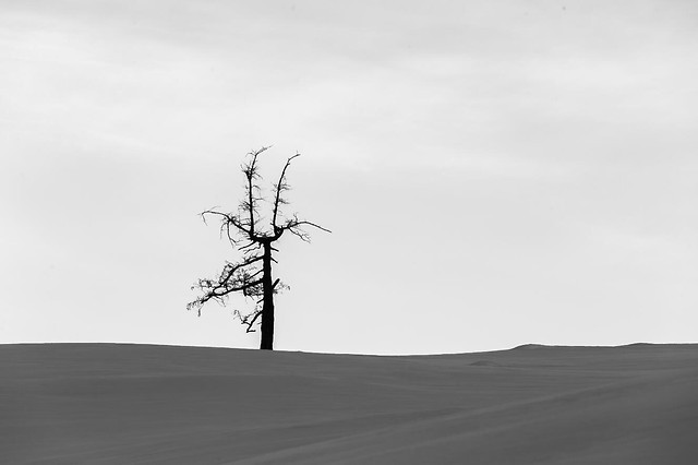 landscape-nature-no-person-tree-sky picture material