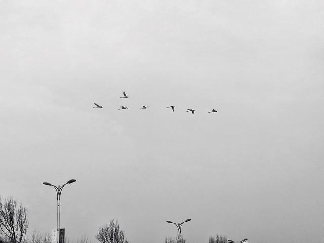 bird-sky-winter-landscape-wildlife picture material