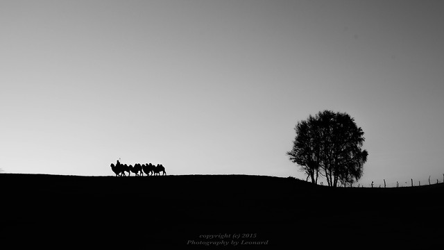 silhouette-sunset-dawn-landscape-sky picture material