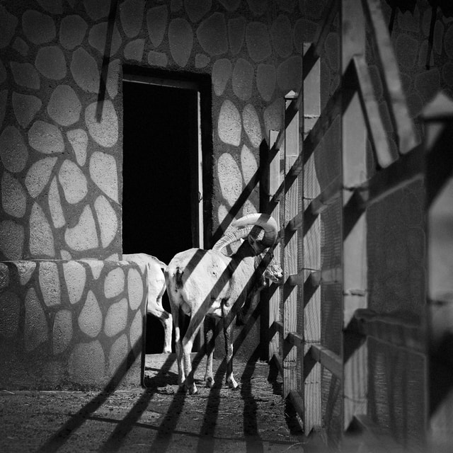 photography-mood-animal-travel-black picture material