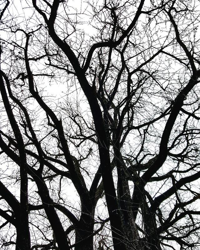 tree-branch-wood-trunk-landscape 图片素材