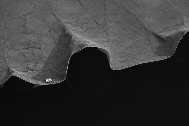 black-white-people-abstract-desktop 图片素材