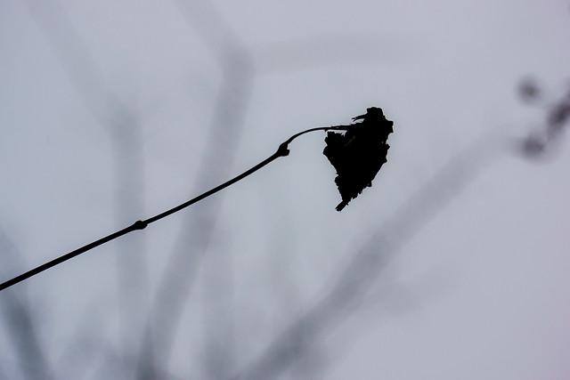 bird-monochrome-nature-sky-no-person picture material