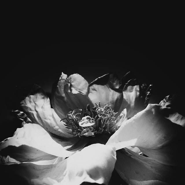 people-wedding-monochrome-flower-adult picture material