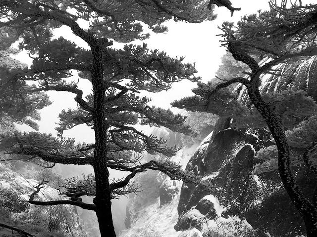 tree-landscape-no-person-nature-conifer 图片素材