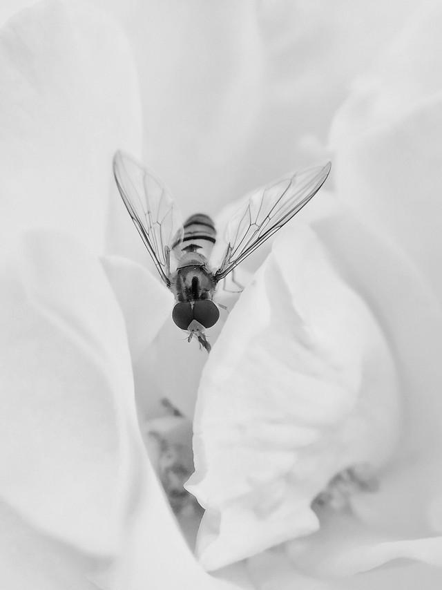 white-black-white-wedding-monochrome-photography-flower 图片素材