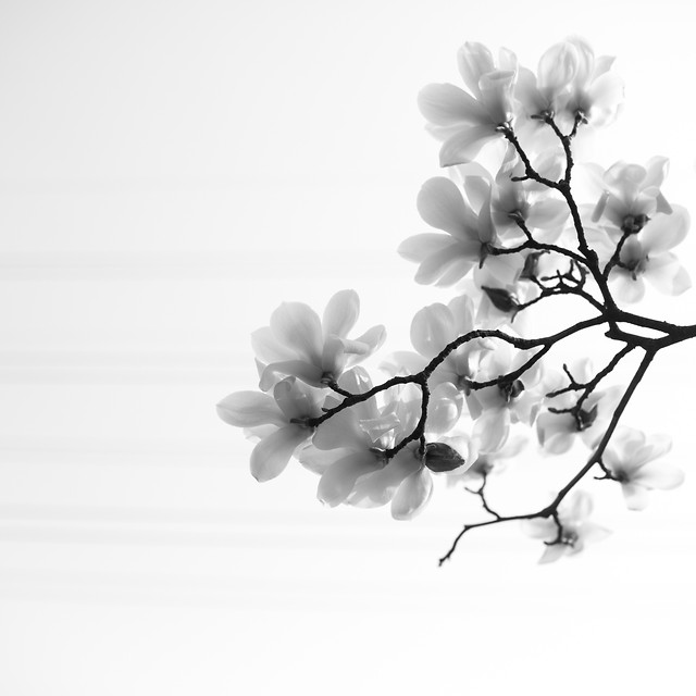 branch-flower-flora-nature-tree picture material