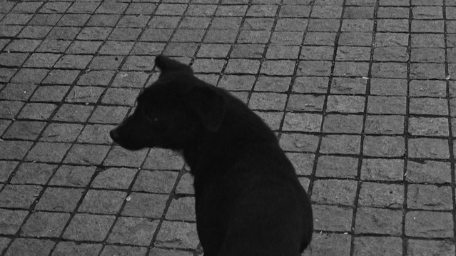 no-person-pavement-street-black-black-white picture material
