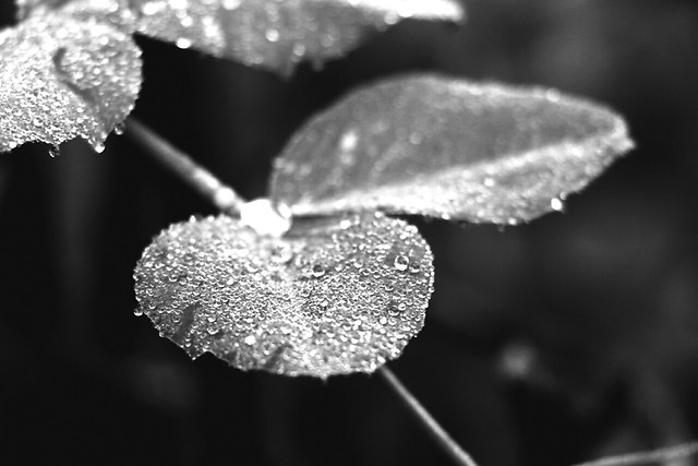 nature-leaf-rain-no-person-winter picture material