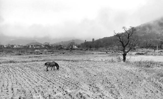 no-person-agriculture-farm-landscape-black-white picture material
