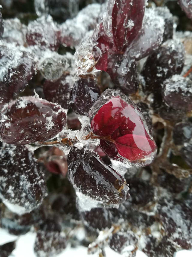 crystal-winter-frost-shining-icee picture material