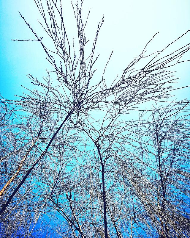 tree-branch-winter-wood-no-person 图片素材