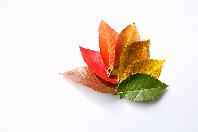 leaf-nature-no-person-fall-disjunct picture material