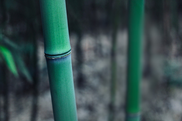 no-person-nature-bamboo-wood-outdoors picture material