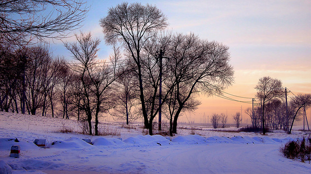 winter-snow-cold-landscape-frost picture material