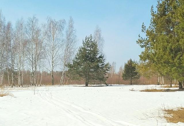 весна-в-лесу picture material