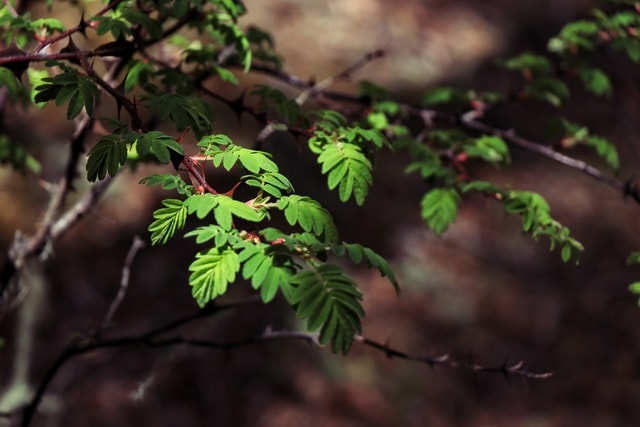 light-and-shadow-plant-leaf-green-nature 图片素材