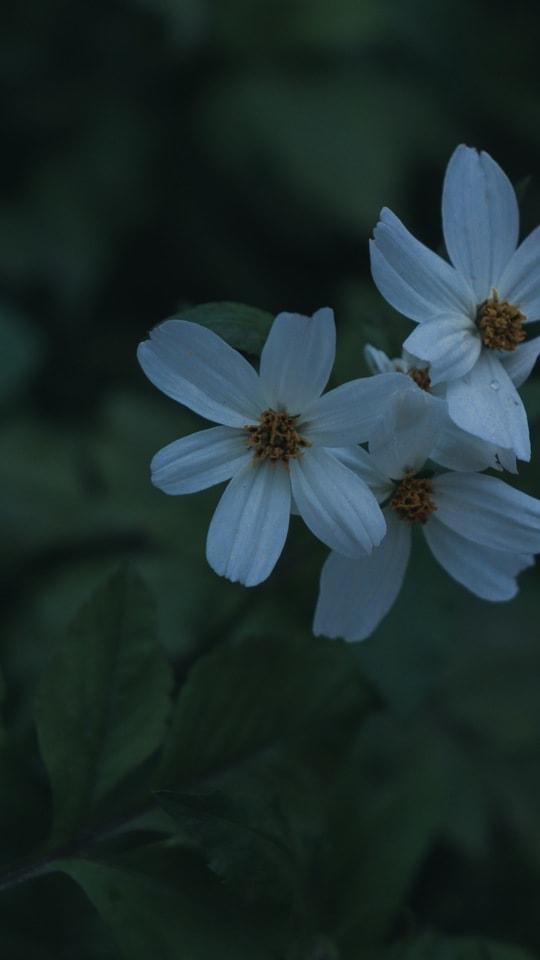 dark-tone-flower-natural-green-petal picture material