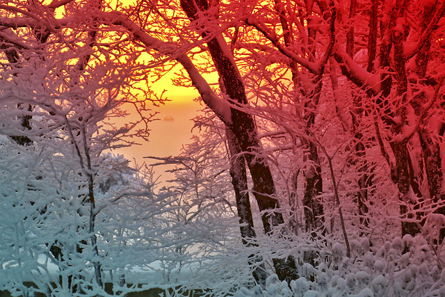 winter-snow-frost-cold-tree 图片素材