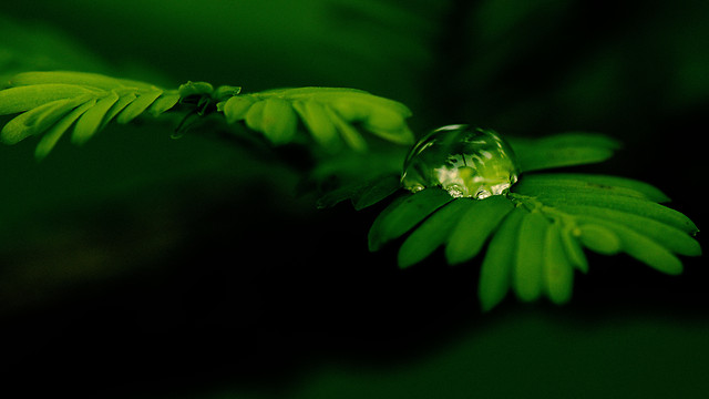 leaf-rain-no-person-blur-flora picture material