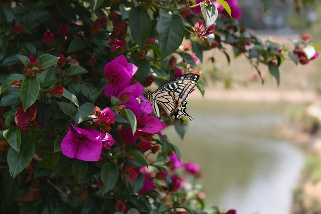 flower-garden-nature-leaf-no-person 图片素材